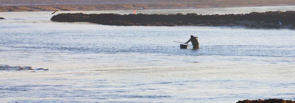 Mariscador en el agua faenando